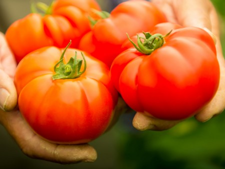 Organic Food Wooster Ohio