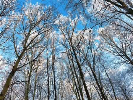 Leaves in absence how to id trees in winter cfaes cold clues the ohio woodland stewards program will hold a winter tree id workshop march 28 in northeast ohio sciox Gallery