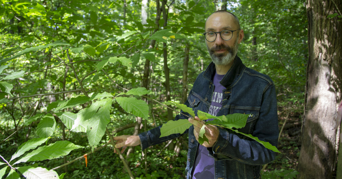 (Matt Davies, an assistant CFAES professor, is helping spearhead a study  to encourage more pawpaw cultivation in Ohio. (Photo: John Rice, CFAES)