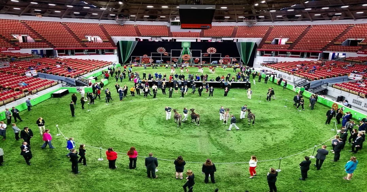 In September, The Ohio State Dairy Judging Team won The World Dairy Expo. (Photo: Bonnie Ayars)
