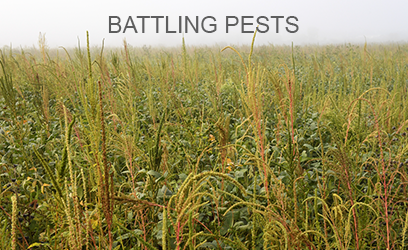 Battling Pests