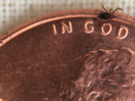 Tick Season Has Officially Started in Ohio, Increasing the