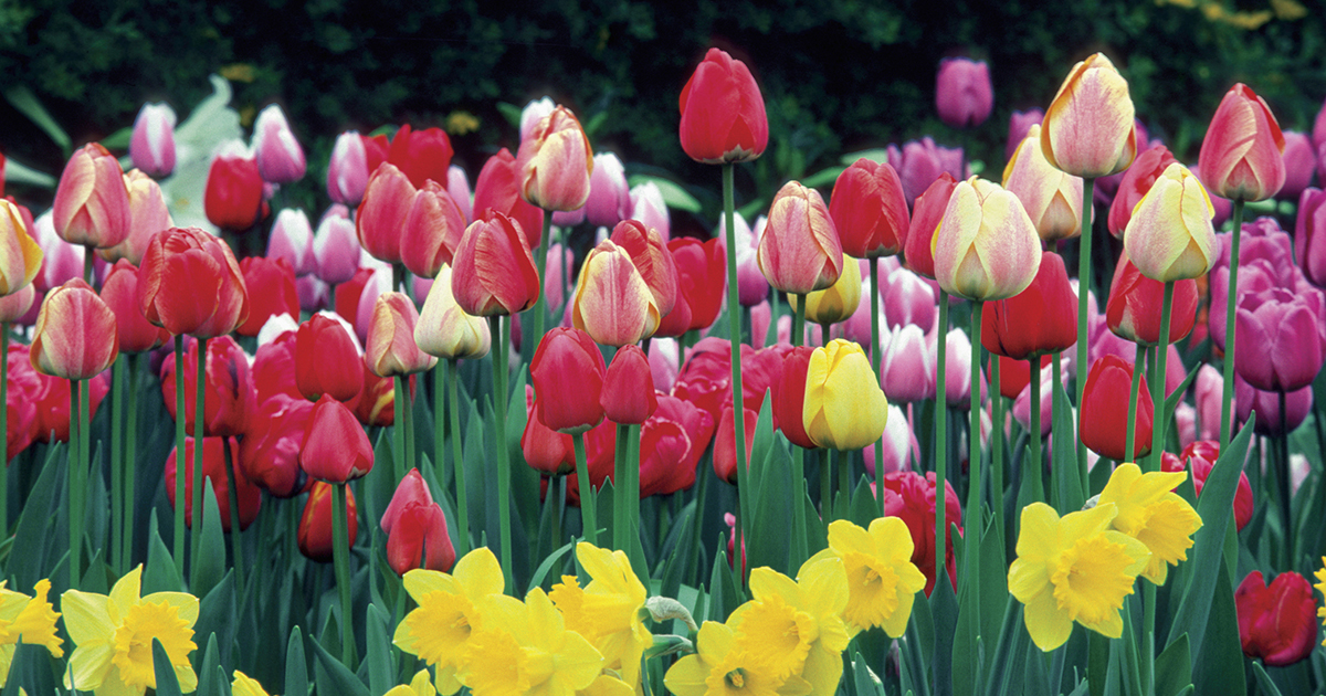 The Spring Home And Garden Show Is Feb. 17u201325 At The Ohio Expo Center In  Columbus. Ohio State Faculty, Staff, And Students Will Receive $3 Off  Admission At ...