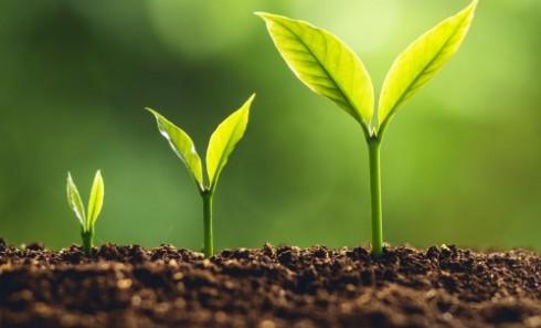 Three green plants showing upward growth