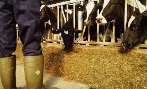 This year is the fourth consecutive year of low milk prices. (Photo: Thinkstock)