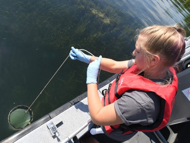 CFAES student Madeline Lambrix nets phytoplankton samples