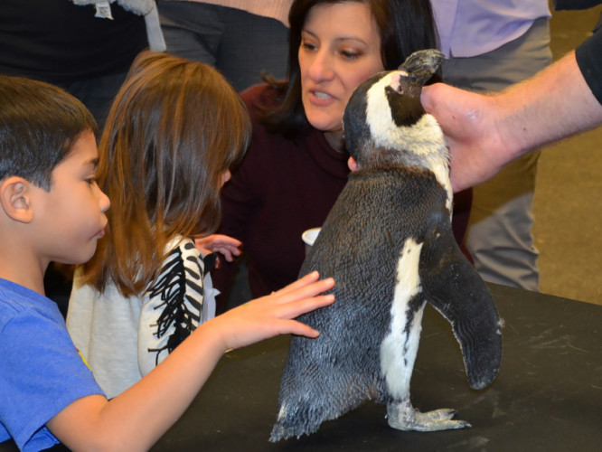 Some  young children interacting with a penguin