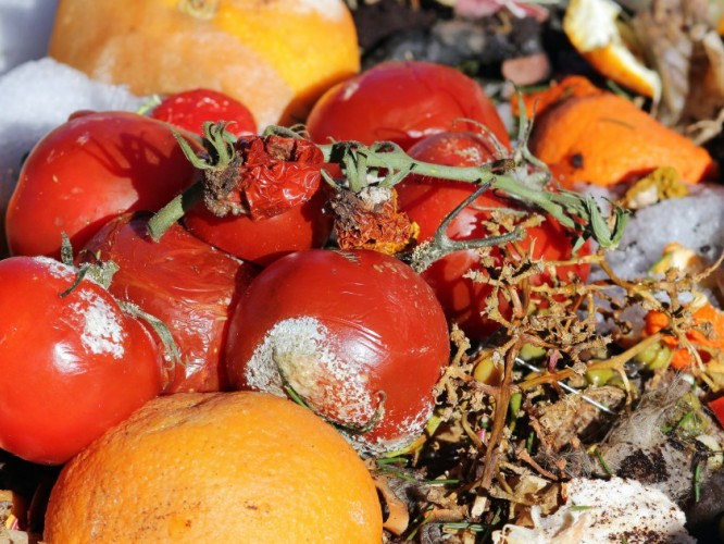 Rotting fruit and vegetables laying in a waste pile