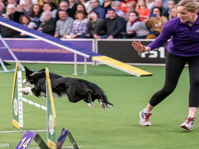 Crank and P!nk working together during their run at Westminster. (Photo courtesy of: 1TDC.com)