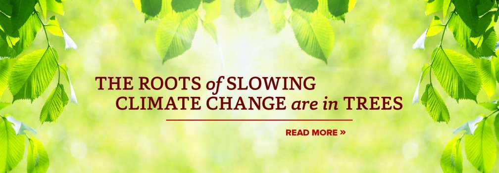 The roots of slowing climate change are in trees.