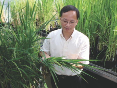 FIGHTING FUNGUS THAT RAVAGES RICE, WHEAT