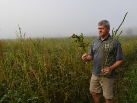 STOPPING PALMER AMARANTH'S SPREAD