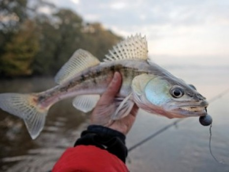 SUPPORTING FISH AND WILDLIFE AND $3.6 BILLION IN RECREATION