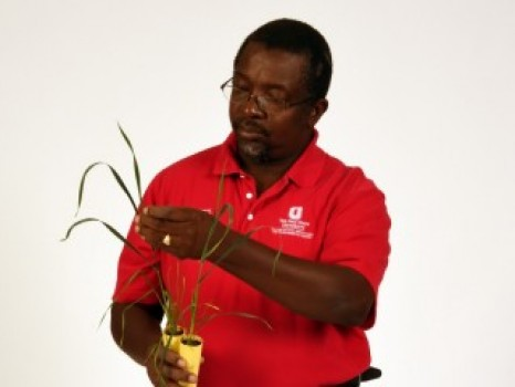 FIGHTING FUSARIUM HEAD BLIGHT IN WHEAT
