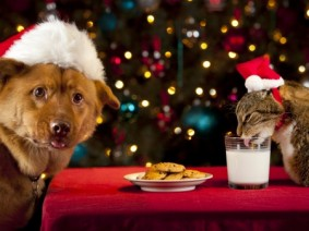 stock photo of dog, cat, cookies and milk