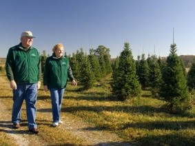 Bill and Donna Cackler, of Cackler Farms in Delaware, Ohio, check some of the 23,000 Christmas trees actively growing on their property. (Photo courtesy of Cackler Farms)