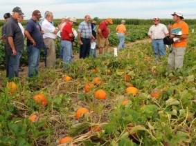 Jim Jasinski (right) during a pumpkin field day with growers at the Western Agricultural Research Station. (Photo by Ken Chamberlain)