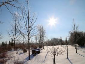 Winter on OARDC's Wooster campus. (Photo by Ken Chamberlain)