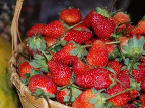 A May 25 field night at the Ohio State University South Centers in Piketon will provide information about increasing the yield on strawberry plants, reducing production costs and using winter protection techniques.