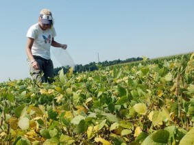 Anne Dorrance, an OARDC researcher, walks through a field of test soybeans. Photo: Flickr