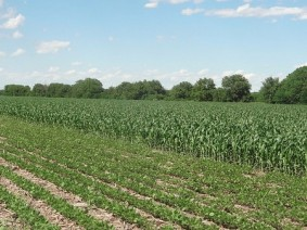 OARDC and OSU Extension are hosting a field day for corn and soybean growers on July 27. Photo: Flickr