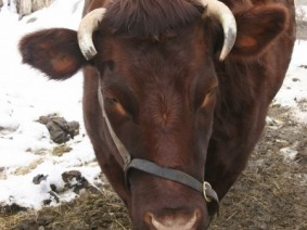 Livestock producers need to be thinking now about how they'll keep their animals warm when the temperatures drop. (Photo: Thinkstock)