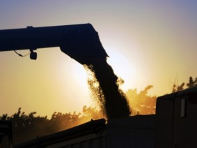 Agriculture economists to offer outlook on what to expect in the 2015 grain market.(Photo:Thinkstock)