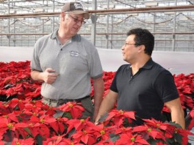 Collaboration between Green Circle Growers' Dean Palm and Ohio State's Luis Cañas has led to more effective, greener ways to grow poinsettias.