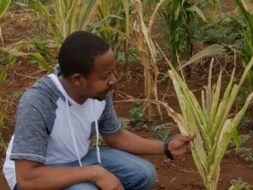 Through his doctoral research, Deogracious P. Massawe is determining the genetic makeup of the viruses killing swaths of cornfields in his native country of Tanzania.