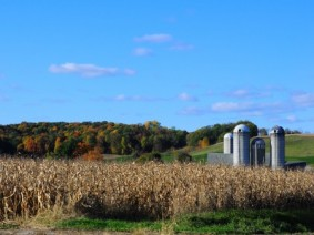 CFAES offers new website to help farmers make decisions on the farm bill's crop program decisions. (Photo: Thinkstock)