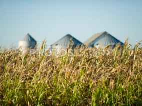 Growers can expect to see tight supplies next year and lower grain prices