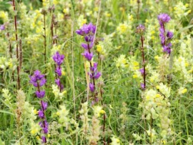 The early appearance of some weeds, including purple deadnettle, is one of the consequences of a warmer than usual winter and wet spring.