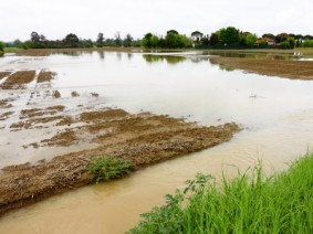 The off and on rain in recent weeks saturated, if not flooded, farm fields across the state, particularly in the west-central counties near the Indiana border.