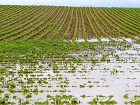 Ohio's amount of rainfall and number of intense rain events have been increasing, causing the potential for more fertilizer runoff and erosion. (Photo: Thinkstock)