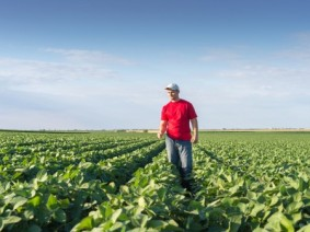 farmer in soybean field, stock image