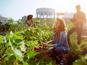 Picking fresh vegetables from a rooftop garden. Photo: Thinkstock