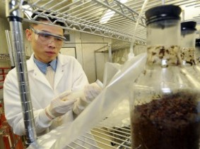 Ohio State researcher Yebo Li checks biomass samples for biogas production in his Wooster laboratory.