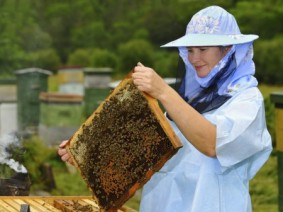 Beekeeping is one of several topics to be discussed during March 28 Small Farms Conference. (Photo: Thinkstock)