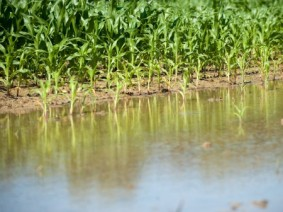 How will this year's historic floods impact grain prices? Ask the experts at Farm Science Review. Photo: Thinkstock.