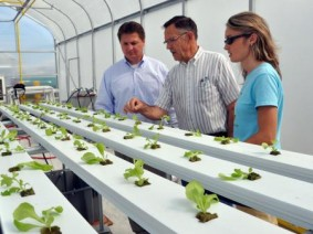 BiOWiSH's Bill Diederich, OARDC's Robert Hansen and CropKing's Natalie Bumgarner survey recently transplanted lettuce at an OARDC greenhouse.