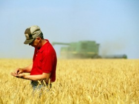 Image of farmer in wheat field