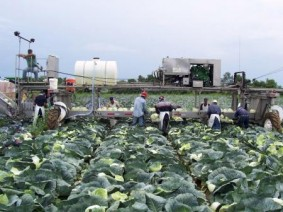 Immigrant and seasonal workers, mostly Latinos, are vital to different sectors of Ohio agriculture, such as vegetable production.