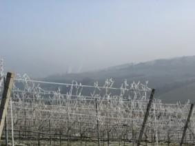 Frozen vineyard. Photo:Thinkstock,