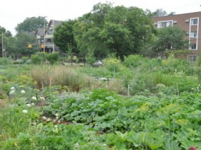 urban farm in Cleveland