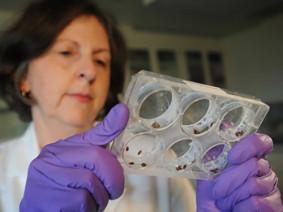 Susan Jones, a CFAES entomologist, works to help consumers prevent bedbug infestations