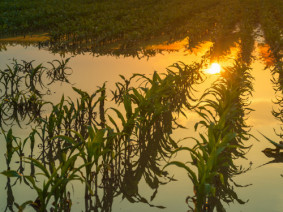 The recent disaster declaration in 40 of Ohio's counties offers financial assistance to farmers unable to plant a cash crop on saturated fields. (Photo: Getty Images)