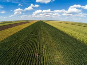 The trade war has brought down prices of soybeans and corn, though yields on both crops are expected to be higher than last year's.  (Photo: Getty Images)