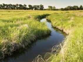 water through pasture