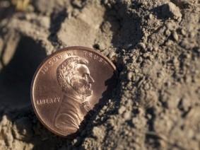 penny half-buried in soil