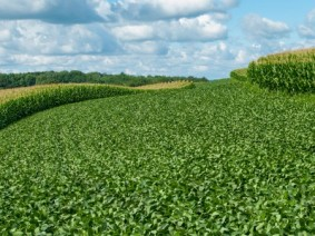 Elevated carbon dioxide in the atmosphere has propelled the growth of some plants, but more is not always better. (Photo: Thinkstock)